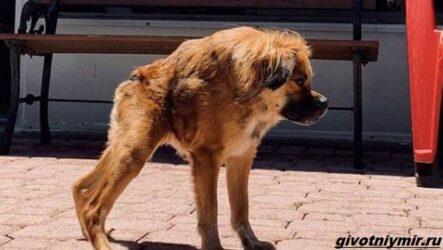 История о собаке с необычной внешностью, которую спасли от эвтаназии