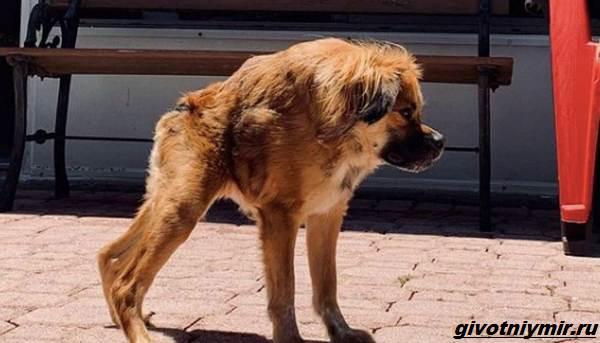 История-о-собаке-с-необычной-внешностью-которую-спасли-от-эвтаназии-1