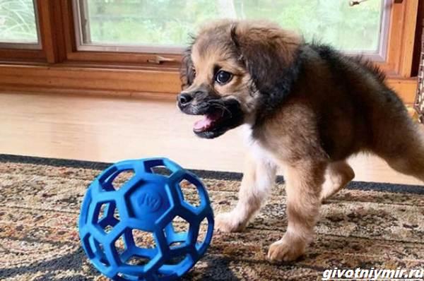 История-о-собаке-с-необычной-внешностью-которую-спасли-от-эвтаназии-2