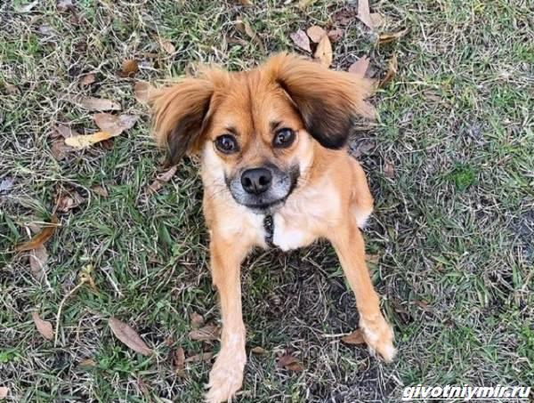 История-о-собаке-с-необычной-внешностью-которую-спасли-от-эвтаназии-3