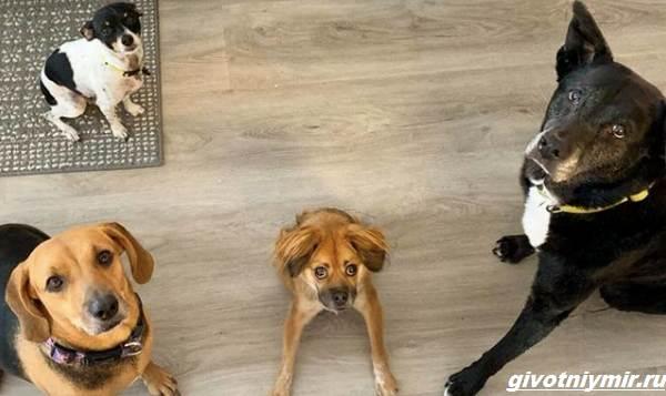 История-о-собаке-с-необычной-внешностью-которую-спасли-от-эвтаназии-4