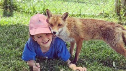 История о спасённой лисе Ферги, которая подружилась с маленькой девочкой