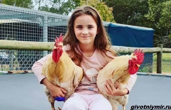 История-о-спасённой-лисе-Ферги-которая-подружилась-с-маленькой-девочкой-2