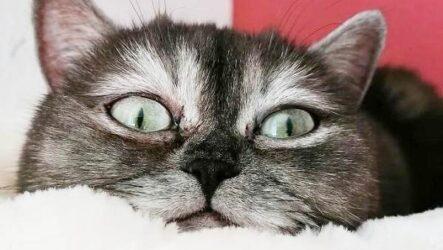 История о своеобразной кошке, которую никто не хотел забирать из приюта