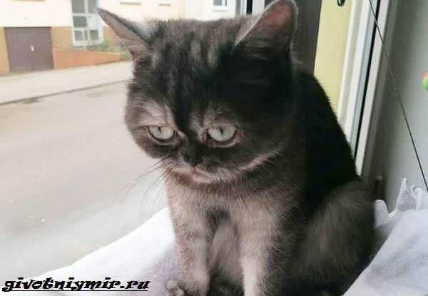 История-о-своеобразной-кошке-которую-никто-не-хотел-забирать-из-приюта-2