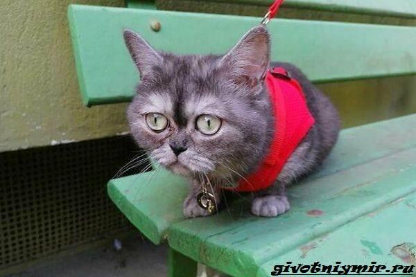 История-о-своеобразной-кошке-которую-никто-не-хотел-забирать-из-приюта-4