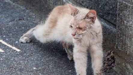 История удивительного перевоплощения больного кота в роскошного питомца