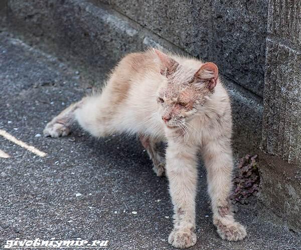 История-удивительного-перевоплощения-больного-кота-в-роскошного-питомца-1