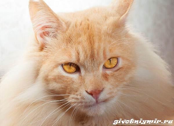 История-удивительного-перевоплощения-больного-кота-в-роскошного-питомца-4