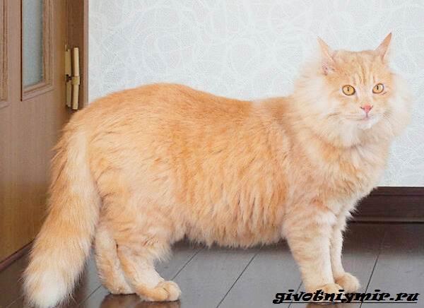 История-удивительного-перевоплощения-больного-кота-в-роскошного-питомца-5