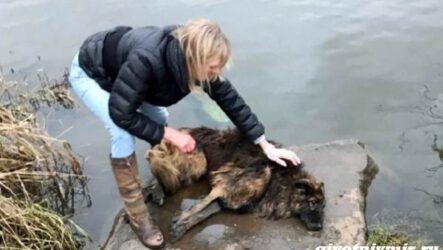 История о брошенной в реку собаке, которая наконец-то обрела семью