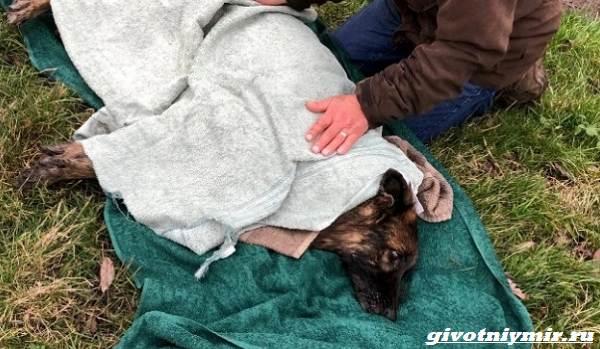История-о-брошенной-в-реку-собаке-которая-наконец-то-обрела-семью-3