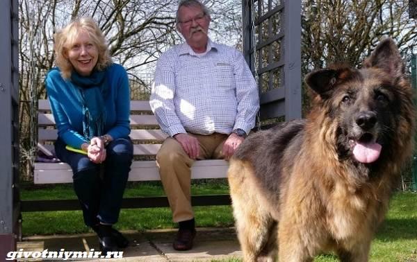 История-о-брошенной-в-реку-собаке-которая-наконец-то-обрела-семью-4