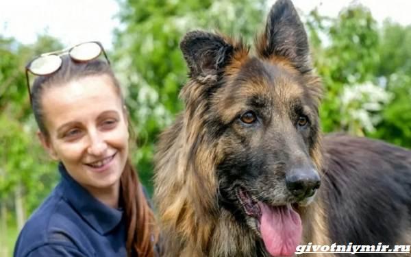 История-о-брошенной-в-реку-собаке-которая-наконец-то-обрела-семью-5