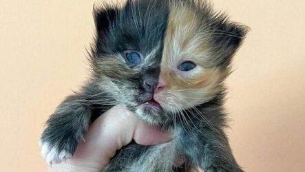 История о двуликом котёнке, который оказался в дружной кошачьей семье