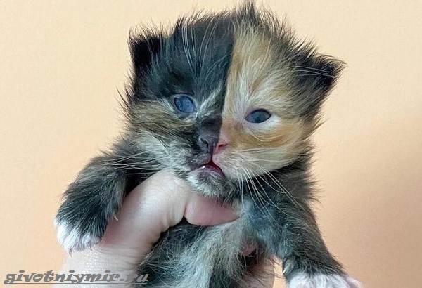 История-о-двуликом-котёнке-который-оказался-в-дружной-кошачьей-семье-1