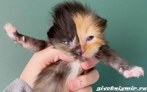 История-о-двуликом-котёнке-который-оказался-в-дружной-кошачьей-семье-3