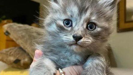 История о кошке и котятах, которых забрали с улицы
