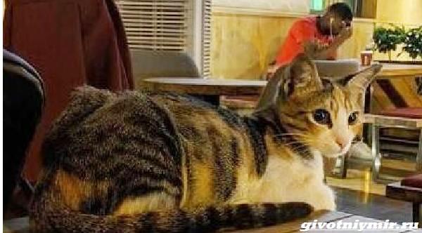 История-о-кошке-которая-ходила-за-мужчиной-пока-не-покорила-его-сердце-2