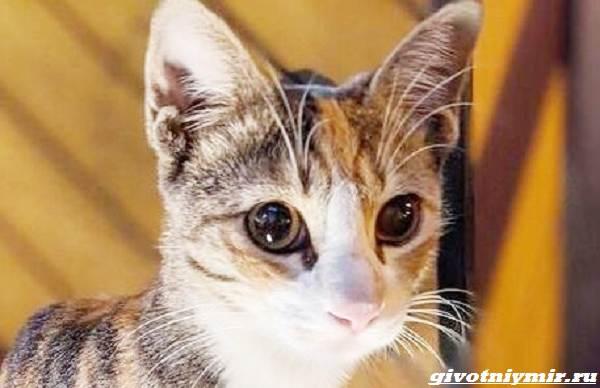 История-о-кошке-которая-ходила-за-мужчиной-пока-не-покорила-его-сердце-3