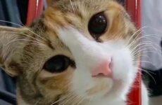 История о кошке, которая ходила за мужчиной, пока не покорила его сердце