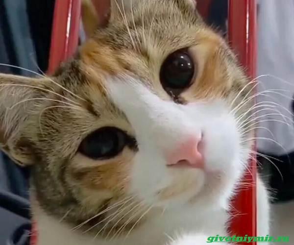 История-о-кошке-которая-ходила-за-мужчиной-пока-не-покорила-его-сердце-4