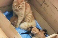 История о кошках, которые сами пришли в больницу с котятами в зубах