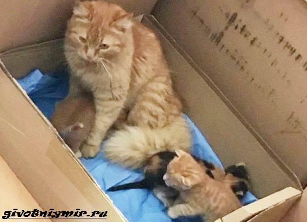 История-о-кошке-которая-сама-пришла-в-больницу-с-котятами-в-зубах-1