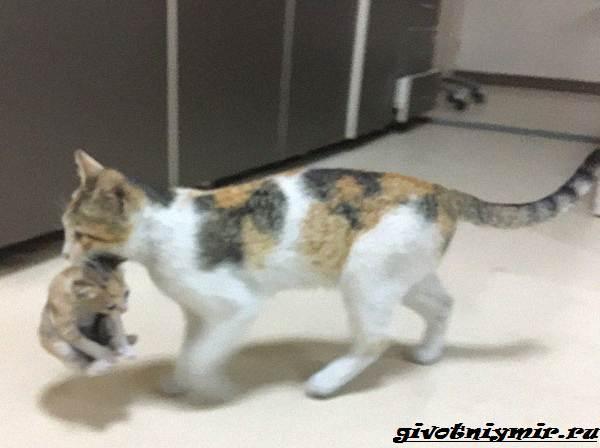 История-о-кошке-которая-сама-пришла-в-больницу-с-котятами-в-зубах-5