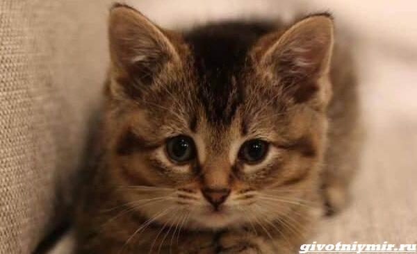 История-о-котенке-с-искривленными-лапками-которого-нашли-в-конюшне-1