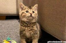 История о котенке с искривленными лапками, которого нашли в конюшне