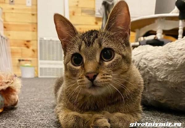 История-о-котенке-с-искривленными-лапками-которого-нашли-в-конюшне-4