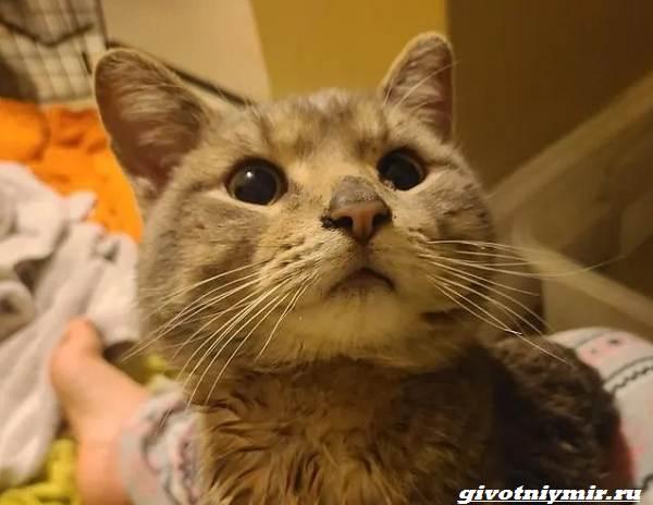 История-о-котике-который-прятался-от-ливня-и-пытался-найти-дом-2