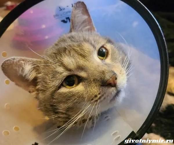 История-о-котике-который-прятался-от-ливня-и-пытался-найти-дом-3
