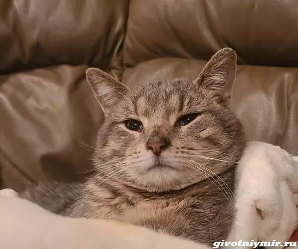 История-о-котике-который-прятался-от-ливня-и-пытался-найти-дом-4