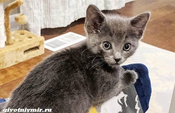 История-о-котёнке-которого-спасла-операция-на-сердце-1