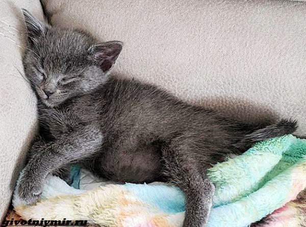 История-о-котёнке-которого-спасла-операция-на-сердце-4