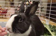 История о крольчихе и собаке, которых бросили на произвол судьбы
