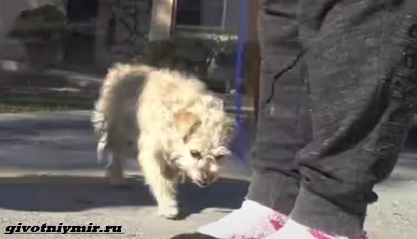 История-о-крольчихе-и-собаке-которых-бросили-на-произвол-судьбы-2