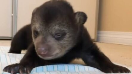История о медвежатах, которые начали новую жизнь