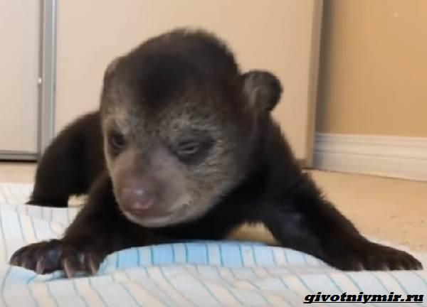 История-о-медвежатах-которые-начали-новую-жизнь-1