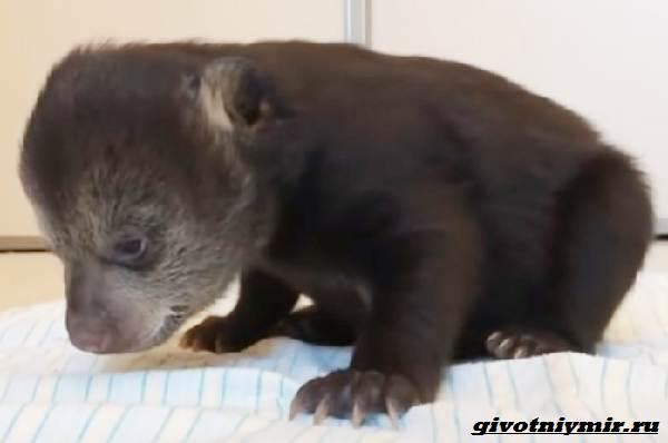 История-о-медвежатах-которые-начали-новую-жизнь-2