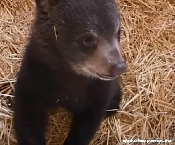 История-о-медвежатах-которые-начали-новую-жизнь-4