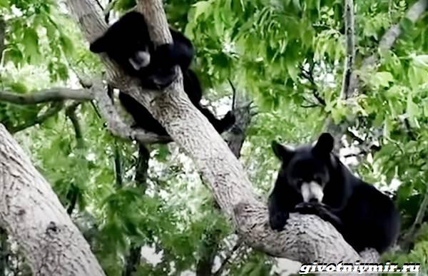 История-о-медвежатах-которые-начали-новую-жизнь-5