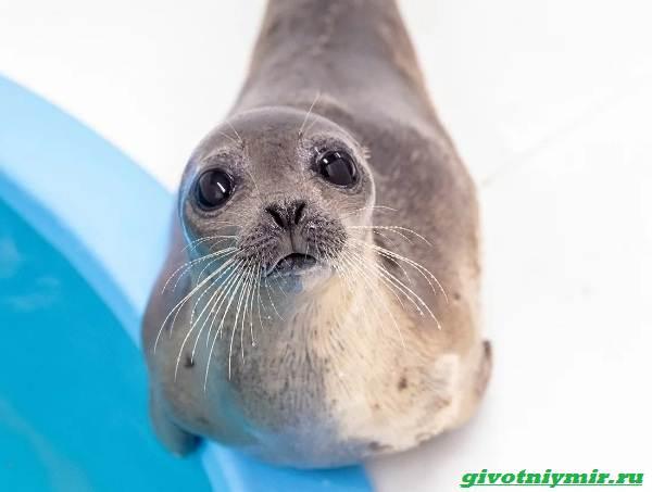 История-о-морском-котике-и-тюлене-которых-удалось-спасти-от-гибели-1