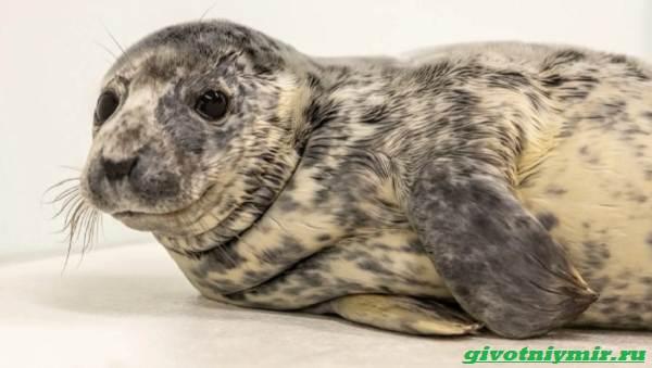 История-о-морском-котике-и-тюлене-которых-удалось-спасти-от-гибели-2