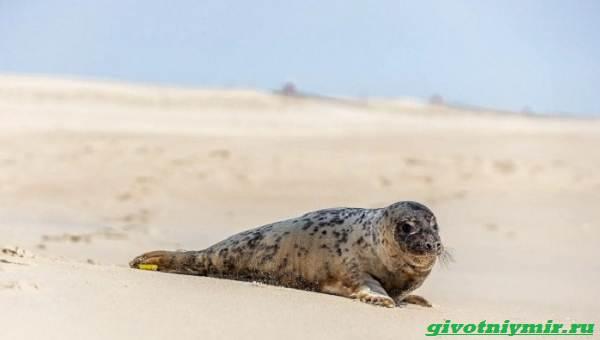 История-о-морском-котике-и-тюлене-которых-удалось-спасти-от-гибели-3