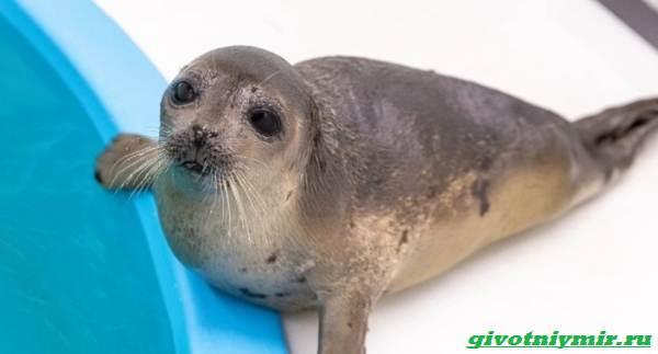 История-о-морском-котике-и-тюлене-которых-удалось-спасти-от-гибели-4