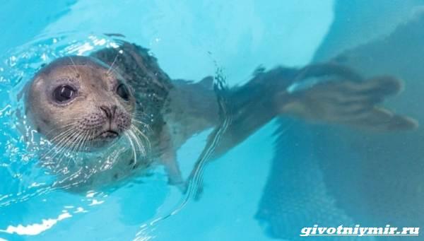 История-о-морском-котике-и-тюлене-которых-удалось-спасти-от-гибели-5