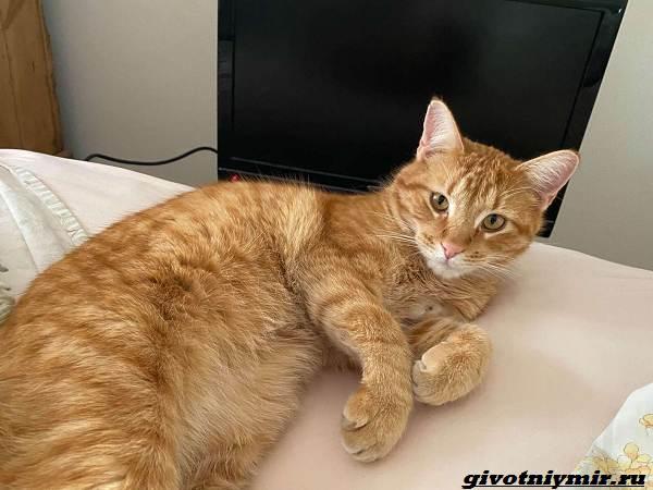 История-о-рыжем-коте-который-любит-смотреть-видео-1